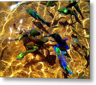 Color Fish Metal Print by Saki Art