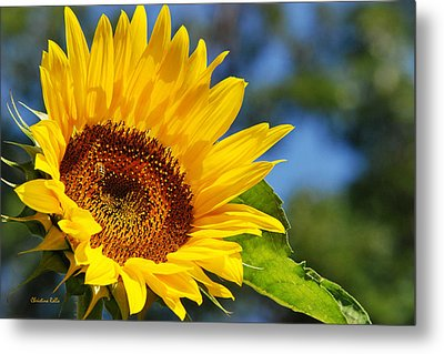 Color Me Happy Sunflower Metal Print by Christina Rollo