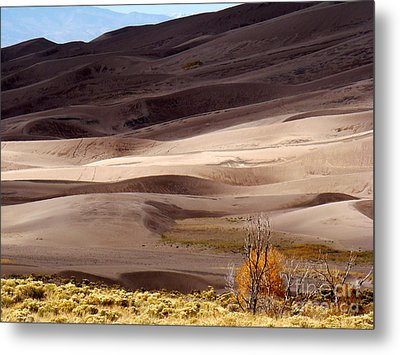 Colorado Sand Dunes Metal Print by Eva Kato
