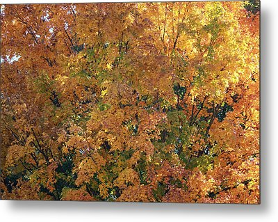Colorful Autumn Metal Print by Laura Watts