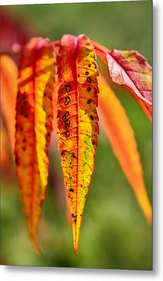 Colorful Autumn Leaves Metal Print by Gynt