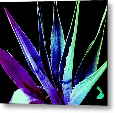 Colorful Cactus  Metal Print by Cindy Edwards