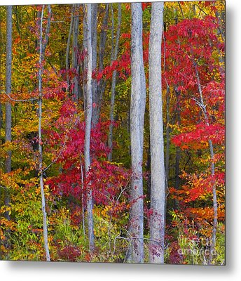 Colorful Fall Forest Metal Print by Scott Cameron