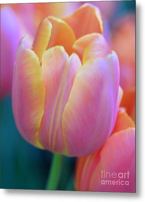 Colorful Tulip Metal Print by Kathleen Struckle