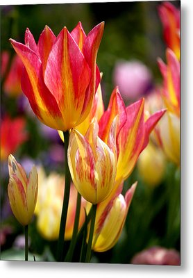 Colorful Tulips Metal Print by Rona Black