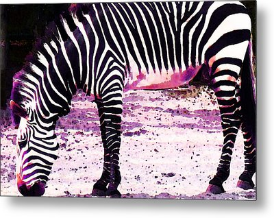Colorful Zebra 2 - Buy Black And White Stripes Art Metal Print by Sharon Cummings