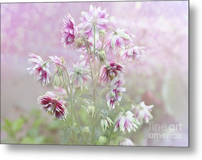 Columbine Beauty Metal Print by Elaine Manley