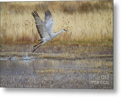 Come Fly With Me Metal Print by Ruth Jolly