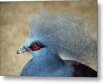 Common Crowned Pigeon Metal Print by Cynthia Guinn