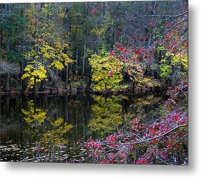 Congaree Swamp Metal Print by Skip Willits