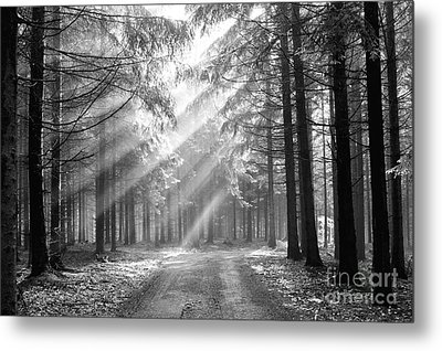 Coniferous Forest In Early Morning Metal Print by Michal Boubin