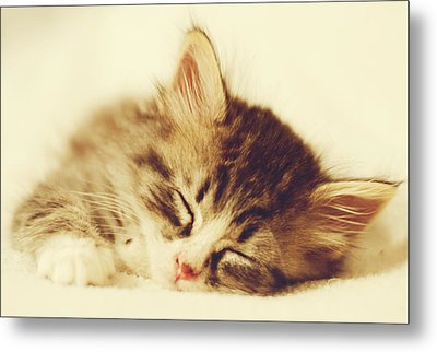 Content Kitty Metal Print by Pam  Holdsworth