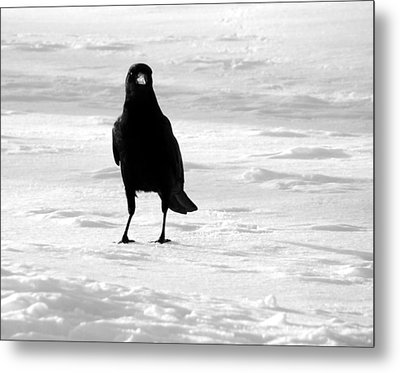 Contrast Metal Print by Gothicrow Images