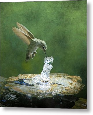 Cool Refreshment Metal Print by Angie Vogel