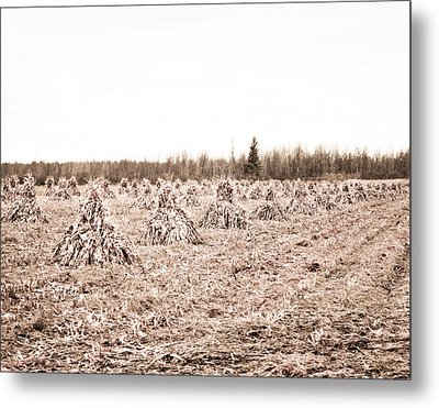 Corn Shocks Metal Print by Maggy Marsh