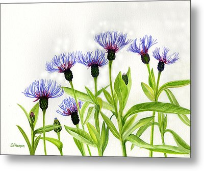 Cornflowers Metal Print by Sharon Freeman