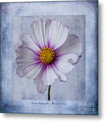 Cosmos With Textures Metal Print by John Edwards