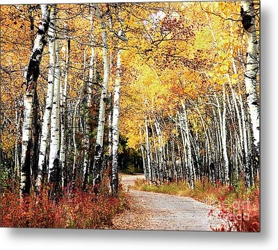 Country Roads Metal Print by Steven Reed