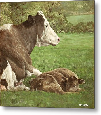Cow And Calf In Field Metal Print by Martin Davey
