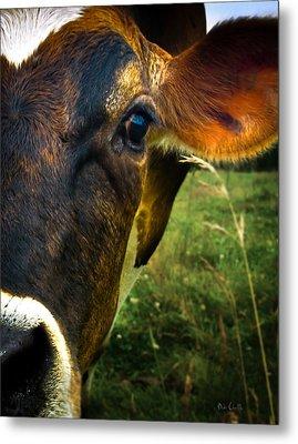 Cow Eating Grass Metal Print by Bob Orsillo