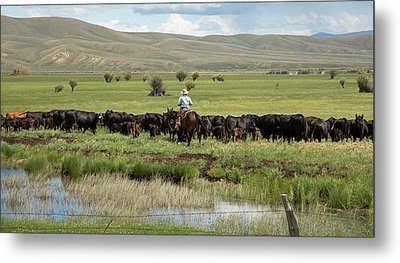 Cowboy Herding On A Cattle Ranch Metal Print by Jim West