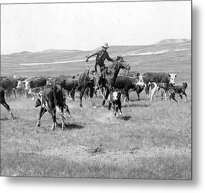 Cowboy Western Cattle Drive Vintage  Metal Print by Retro Images Archive