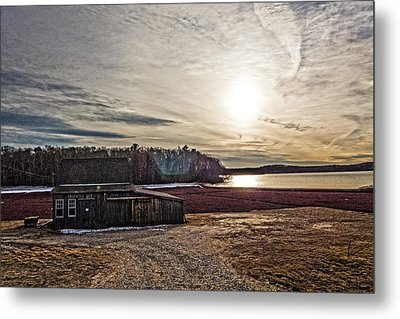 Cranberry Bog Winter Of 2012 Metal Print by Frank Winters