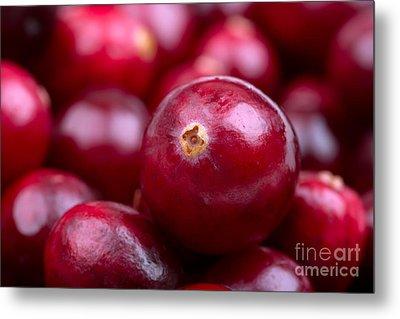 Cranberry Closeup Metal Print by Jane Rix