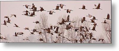Cranes Across The Sky Metal Print by Don Schwartz