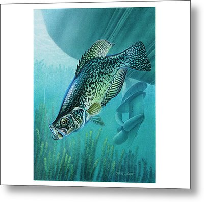 Crappie And Boat Metal Print by JQ Licensing