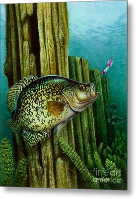 Crappie And Posts Metal Print by Jon Q Wright