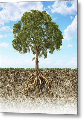 Cross Section Of Soil Showing A Tree Metal Print by Leonello Calvetti