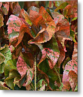 Croton 2 Metal Print by Scott Parker