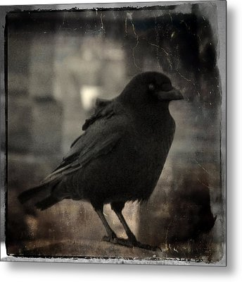 Crow Portrait Metal Print by Gothicrow Images