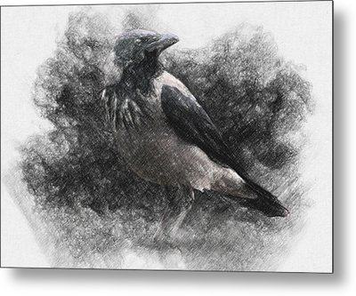 Crow Metal Print by Taylan Apukovska
