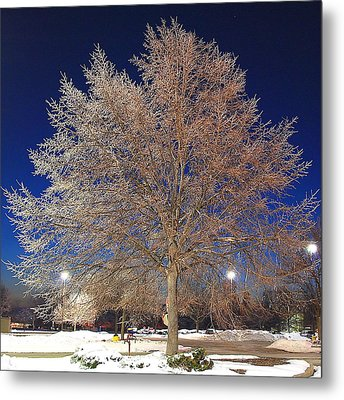 Crystal Tree Metal Print by Frozen in Time Fine Art Photography