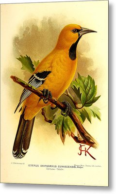 Curacao Oriole Metal Print by J G Keulemans