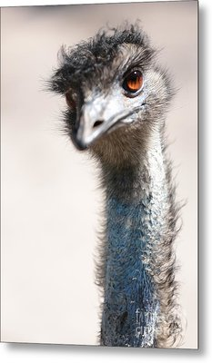 Curious Emu Metal Print by Carol Groenen
