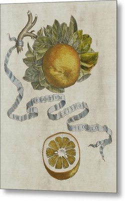 Curled Leaf Orange Metal Print by Cornelis Bloemaert
