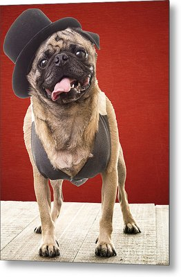 Cute Pug Dog In Vest And Top Hat Metal Print by Edward Fielding