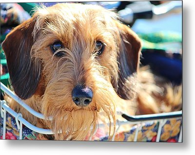 Cute Puppy Metal Print by Cynthia Guinn