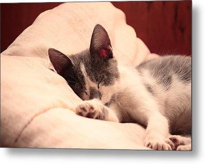 Cute Sleeping Kitten Metal Print by Tilen Hrovatic