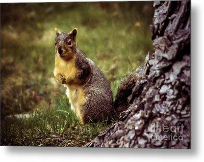 Cute Squirrel Metal Print by Robert Bales