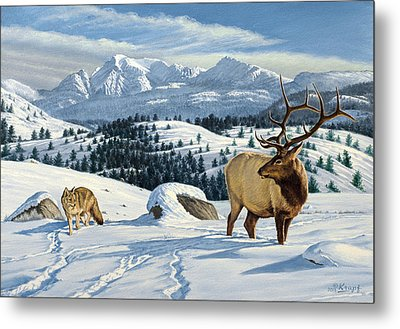 Cutoff Mountain -  Elk And Coyote   Metal Print by Paul Krapf