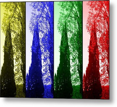 Cypress Metal Print by Rick Todaro