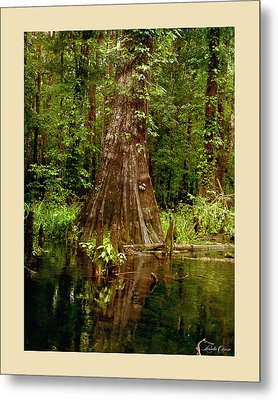 Cypress Roots Ichetucknee Metal Print by Linda Olsen