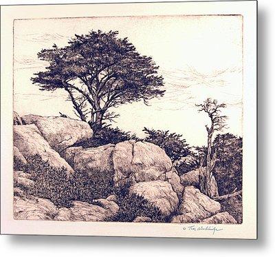 Cypress Tree Metal Print by Tom Wooldridge
