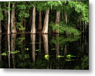 Cypress Trees In Suwanee River Metal Print by Sheila Haddad