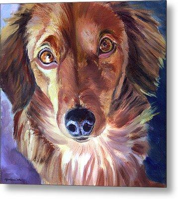 Dachshund Sparkle Eyes Metal Print by Lyn Cook