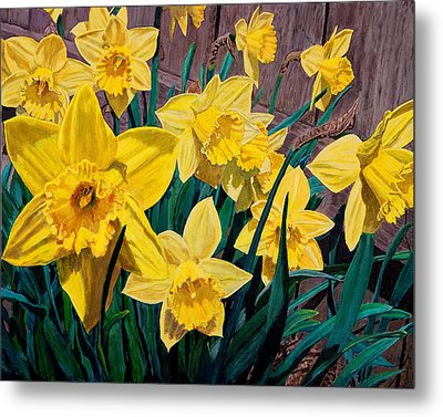 Daffodils Metal Print by Charlie Harris